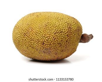Giant jackfruit on white background