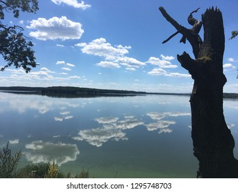 Giant Lake with the blue sky reflection in the water. Dead tree silhouette, wallpaper, vacation in Trebon, Czech Republic