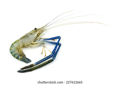 Giant malaysian prawn (Macrobrachium dacqueti) on white