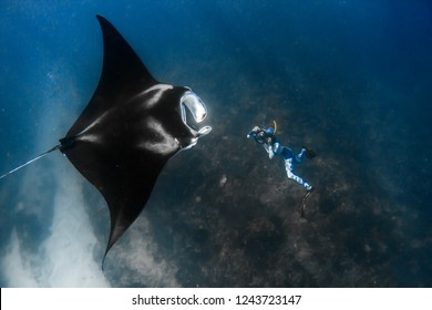 Giant manta ray with amazing tribal markings is photographed from underneath by photographerin colorful wetsuitin clear water