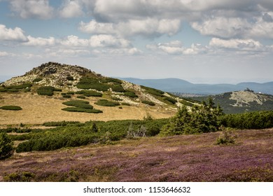 Giant Mountains in Poland, Central Europe, view with cloudy blue sky, rocky green hill and violet flowers