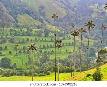 Giant palm trees at the beautiful Cocora Valley, Colombia