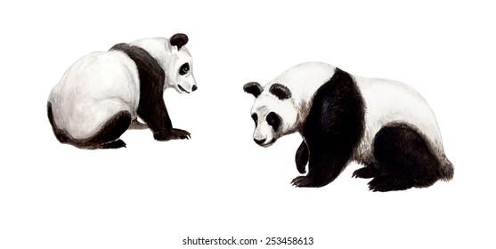 The giant panda (Ailuropoda melanoleuca), black and white cat-foot
