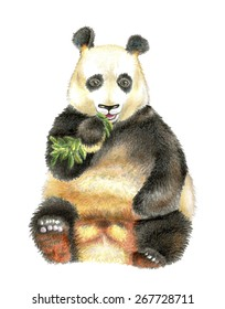 The giant Panda chewing bamboo. Manual illustration Panda Chinese on a white background.