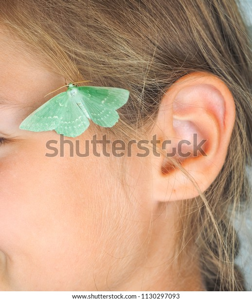 Giant pastel green Emerald Moth at close up