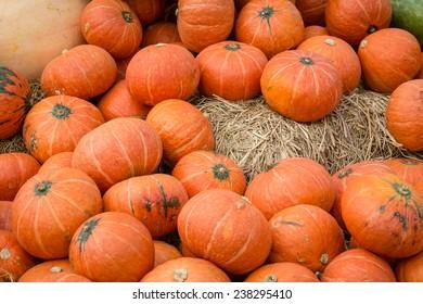 giant pumpkins at jim thompson farm in thailand