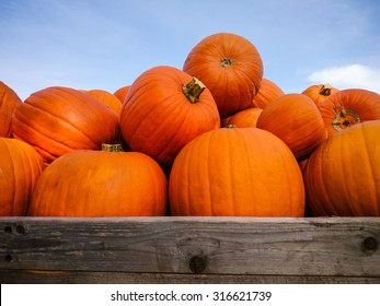 Giant pumpkins on blue sky, horizontal