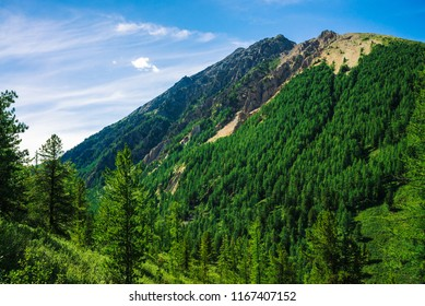 Giant rock with conifer forest on slope in sunny day. Texture of tops of coniferous trees on large mountainside in sunlight. Rocky cliff. Vivid mountain landscape of majestic nature. Pines, spruces.