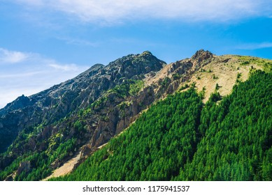 Giant rock with conifer forest on slope in sunny day. Texture of tops of coniferous trees on mountainside in sunlight. Steep rocky cliff. Vivid mountain landscape of majestic nature. View from valley.