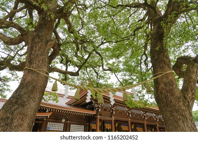 Giant rope between tree. The copled trees have become a symbol of happy marriage and harmonious life within the family at Meiji Shrine or Meiji Jingu in Shibuya, Tokyo, Japan