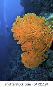 Giant sea fan. North Horn dive site in the Coral Sea.