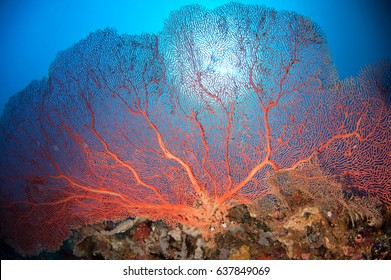 Giant sea fan and sun light