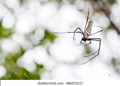 Giant spider in mangrove forest and circle of bokeh background