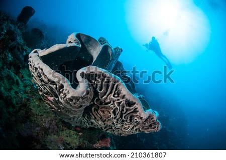 The giant sponge Petrosia