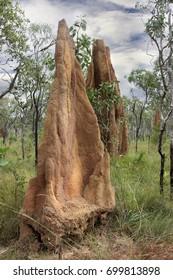 A  giant termite mound in Northern Australia