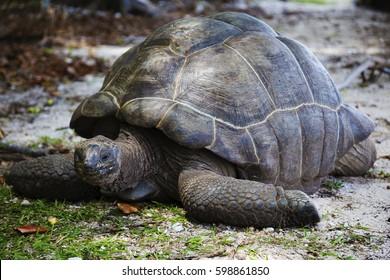 Giant tortoise Seychelles La Digue Island