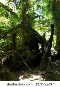 Giant tree in the Great Otway National Park Melbourne Australia