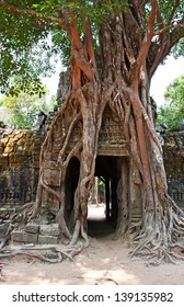 Giant tree growing over the ancient ruins of Ta Prohm temple in Angkor Wat, Siem Reap, Cambodia