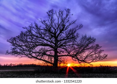 A giant tree with no leaves stands in a field silhouetted by a dramatic and colorful sunset sky.