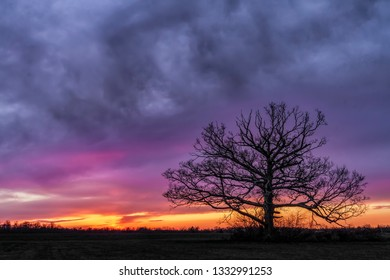A giant tree with no leaves stands in an Indiana field silhouetted by a dramatic and colorful sunset sky.