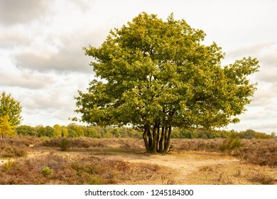 A giant tree standing in a nature park