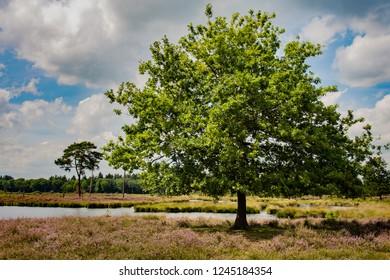 Giant tree standing near a lake