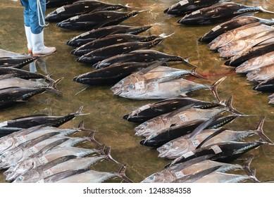 Giant tuna fish is selling in Katsuura fish market, Wakayama, Japan
