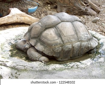 A giant turtle
