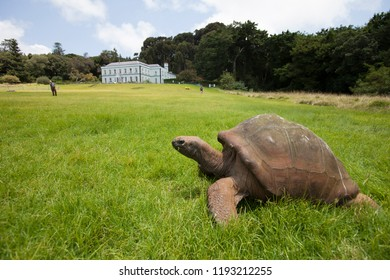 giant turtle in the park of govenors residence on St.Helena Island, south atlantic