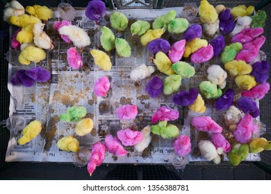Gianyar, Bali / Indonesia - April 1, 2019 : Colorful chicks sell at Gianyar market.