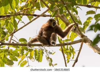 gibbon cute monkey holding and hanging on tree