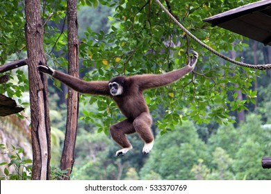 A gibbons resting on a tree house