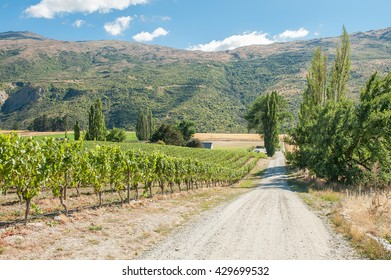 Gibston Valley in Central Otago wine region on the South Island in New Zealand is mostly famous for its Pinot Noirs and white wines. Central Otago is the southernmost wine region in the world.