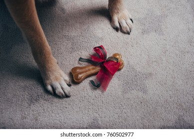 Gift bone between dog paws on gray carpet with stars