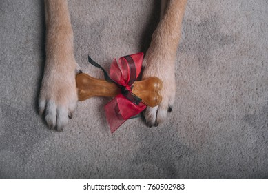 Gift bone between dog paws on gray carpet
