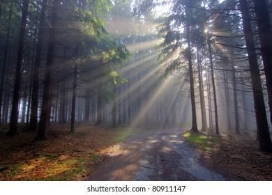 Gift of Light - God Beams