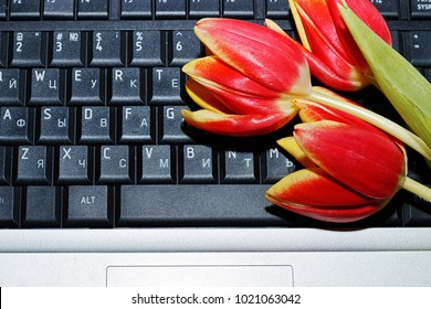 Gift for a woman's day on March 8: A bouquet of three tulips lies on the keyboard from a computer in the workplace