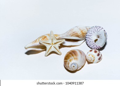 Gifts and seashells on a white background