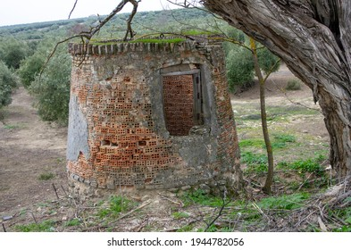 gigantic and abandoned curb of a brick well drilled under a tree in an olive grove