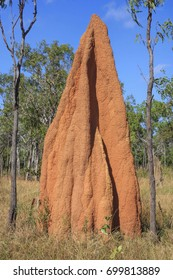 gigantic Cathedral termite mounds