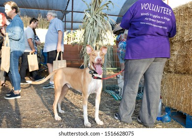 Gilbert, Arizona/USA - September 27, 2019: cute dogs waiting to be adopted at Lovepup pet adoption event