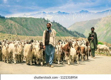 Gilgit Baltistan / Pakistan-June 15, 2018: Shepherds and goats, herd high in the mountains