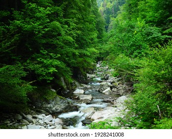 Gilort river flowing rapidly and vividly through its wild stony valley. Wild hardwood forest accompanies the river along its path. Large dislocated boulders populate the riverbed. Carpathia, Romania.