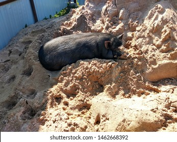 Gilt basks in the sun in the sand. Sunbathing.