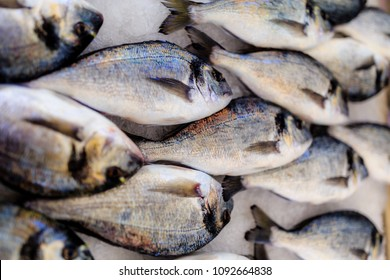 The gilt-head bream is a fish of the bream family Sparidae found in the Mediterranean Sea and the eastern coastal regions of the North Atlantic Ocean.