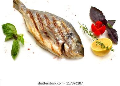 Gilt-head sea bream fish on white background