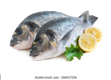 Gilthead sea breams or dorada fish isolated on white background