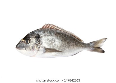 gilt-head seabream isolated on white