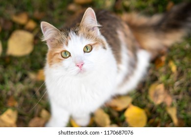 Ginger cat in autumn watching and nice sitting