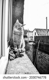Ginger cat or blackandwhite cat